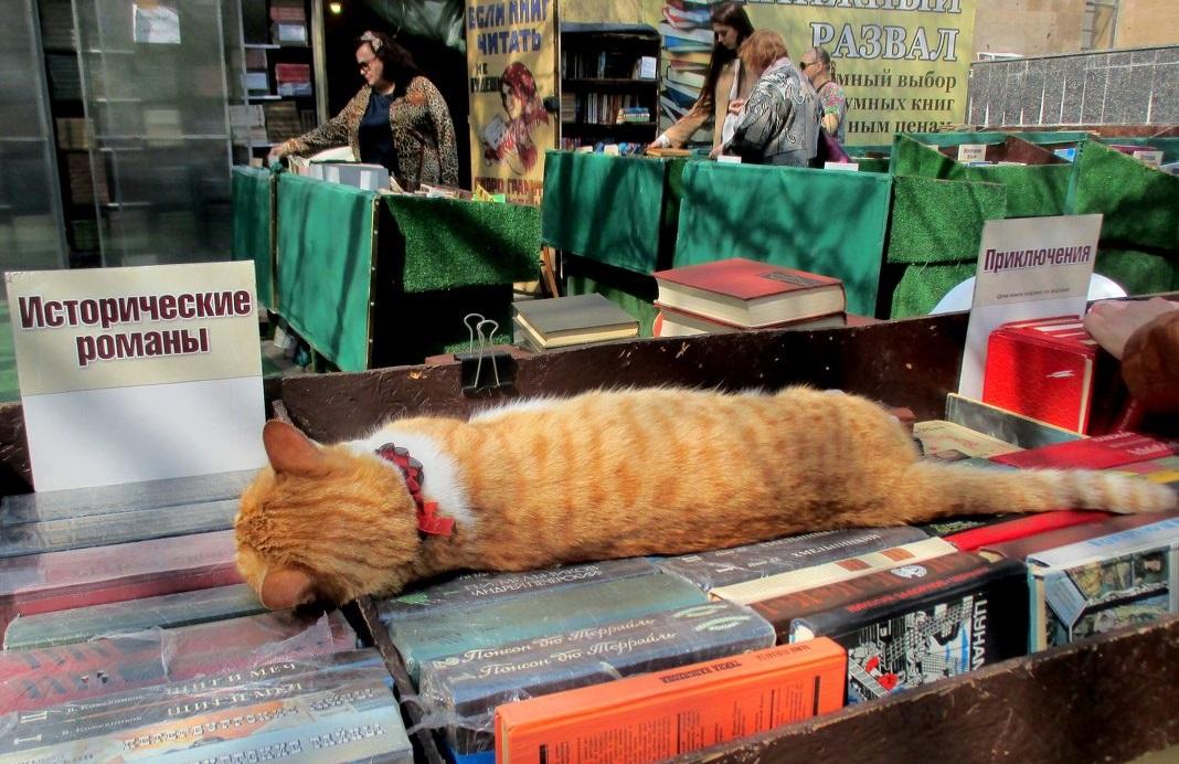 Собственник пояснил ситуацию вокруг книжного развала в Ростове