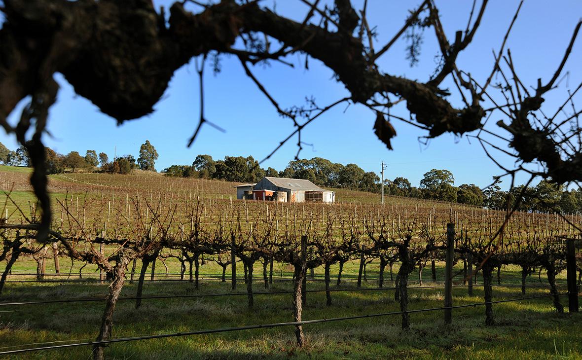 Австралия пожаловалась в ВТО на Канаду из-за ограничений в продаже вина