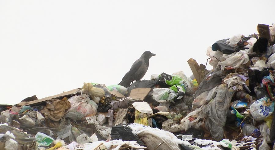 Для проведения мусорной реформы в Прикамье заявился только один участник