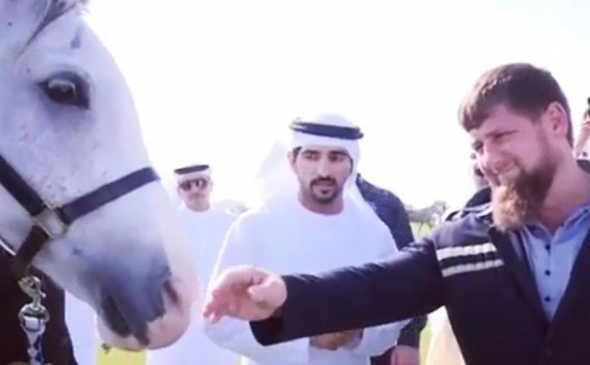 Transparency попросило проверить подаренного Кадырову принцем Дубая коня
