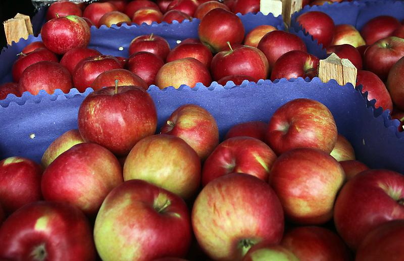 В Петербурге появятся местные яблоки