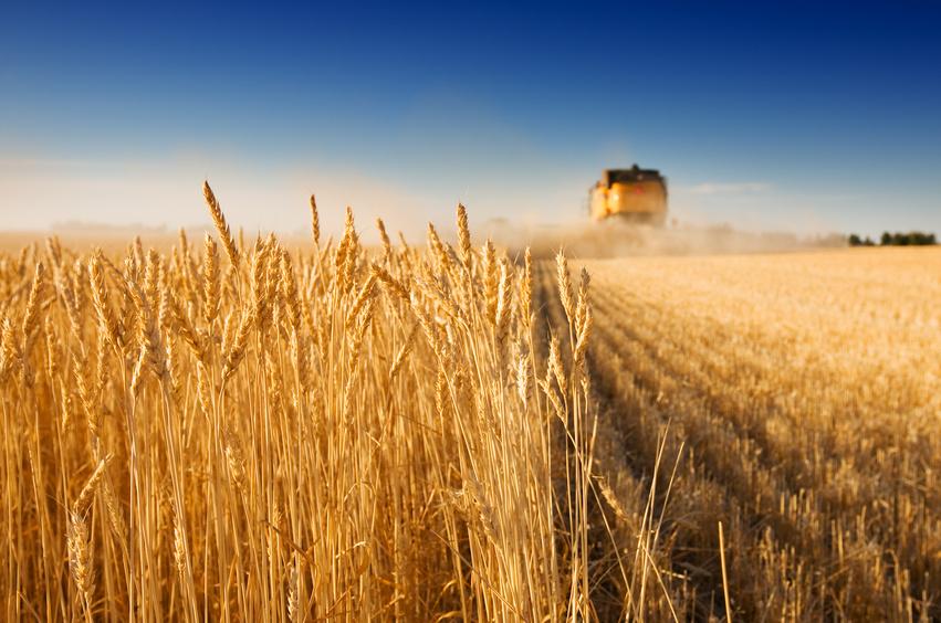Холодный душ для аграриев: бизнес-истории Татарстана в 2017 году