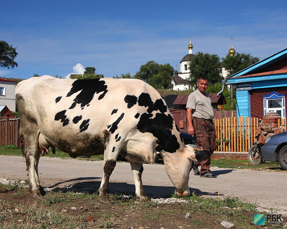 Сельхозпроизводство в Татарстане выросло на 1,4% до 90 млрд рублей