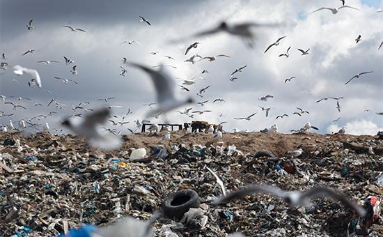 Очищение огнем: кто заплатит за мусоросжигательные заводы в Подмосковье