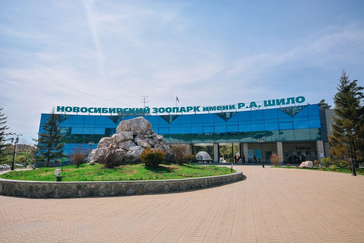 Новосибирск за минуту: «наезд» на Шило и срок за многомиллионную кражу