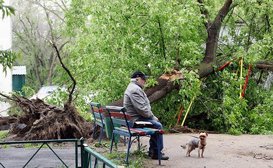 Жертвами урагана вПодмосковье стали ребенок ипожилой мужчина