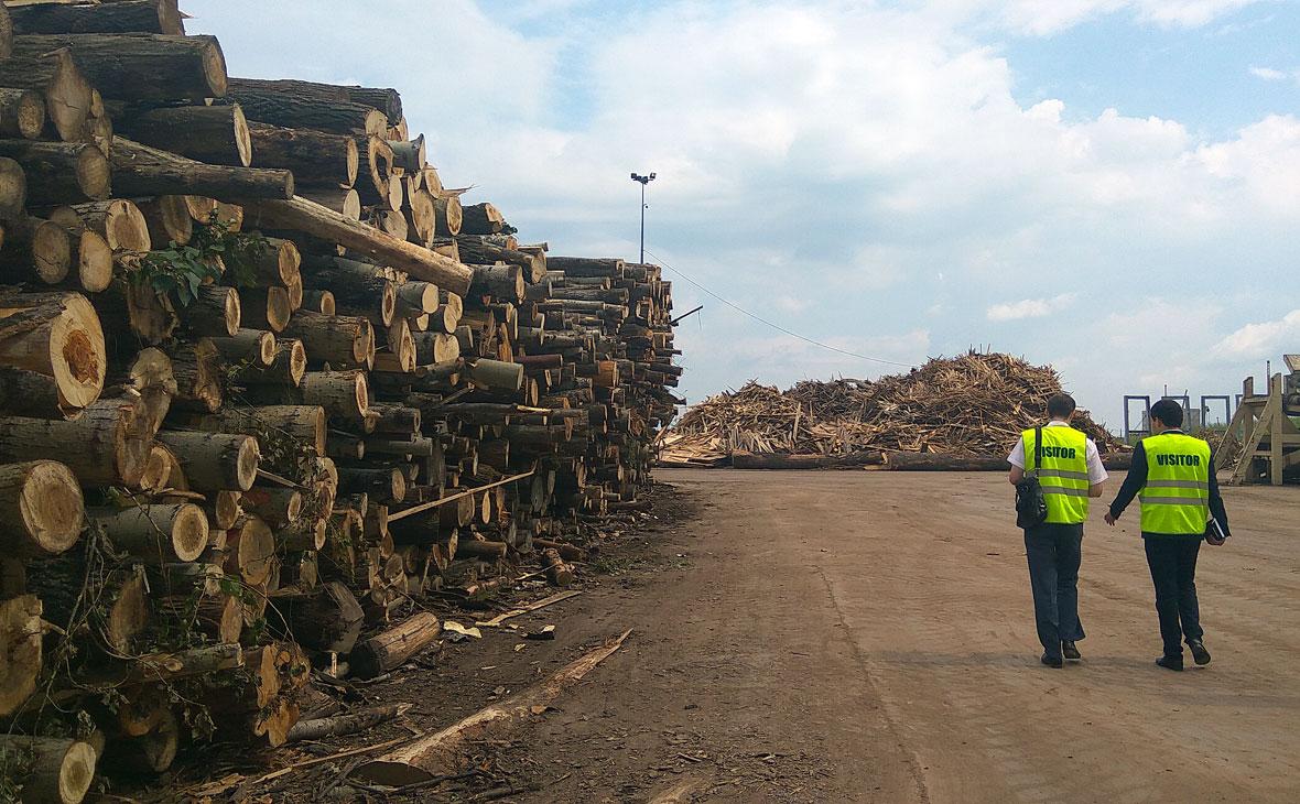 В Башкирии бизнес получил только треть выделенного под вырубку леса