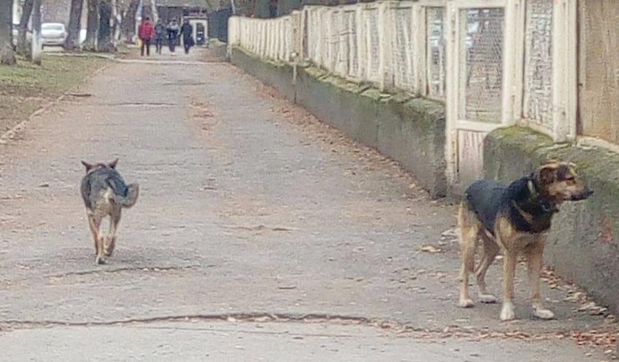 Муниципальный приют для собак в Перми готовы передать в частные руки