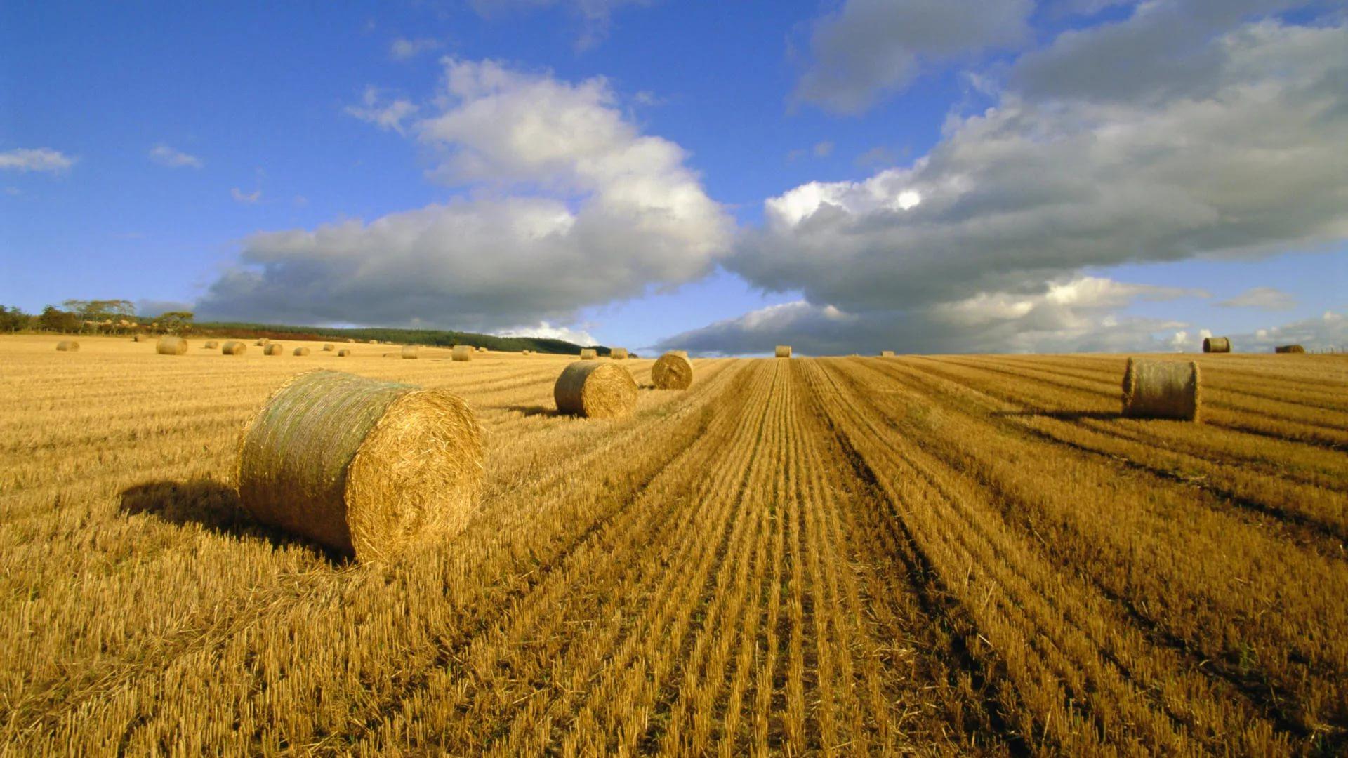 Татарстан на 80% сократил расходы на страхование посевов до 92 млн рублей