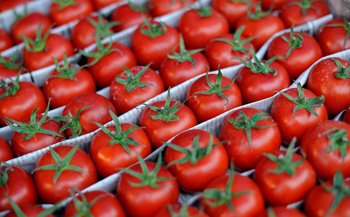 Конец эмбарго: что ждет Кубань после возвращения турецких помидоров