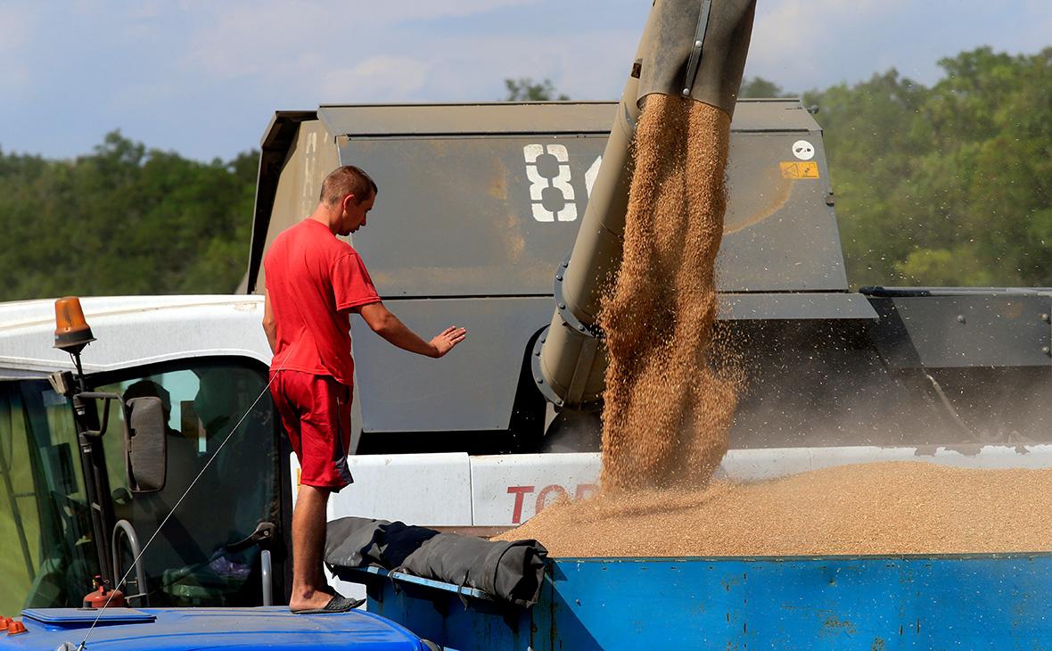 СМИ узнали о просьбе аграриев из регионов ограничить экспорт зерна