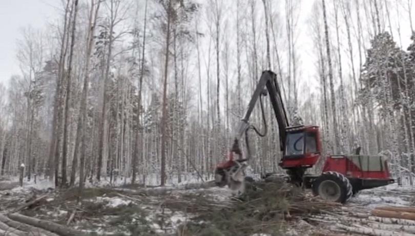 Суд обязал минприроды Прикамья оценить региональные леса