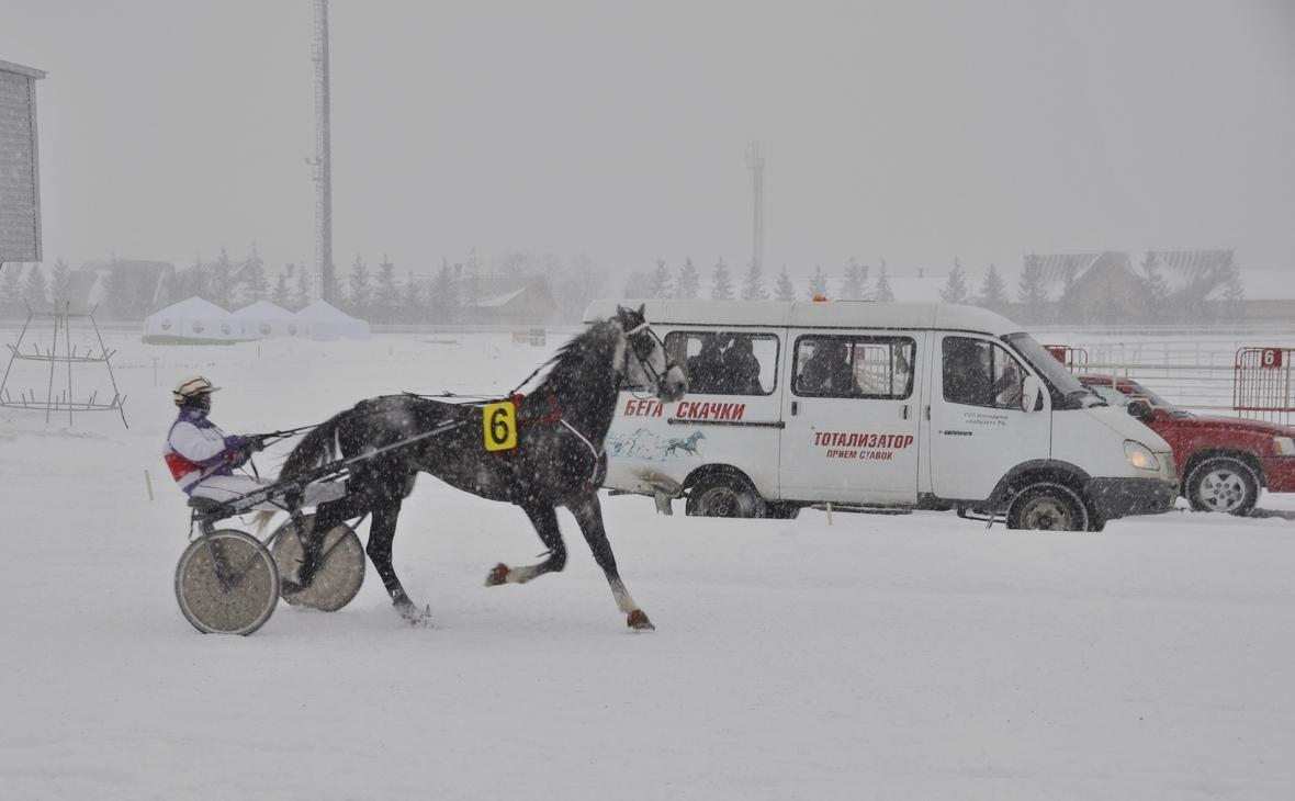 Исследование: Что мешает развитию спортивного коневодства в Башкирии?