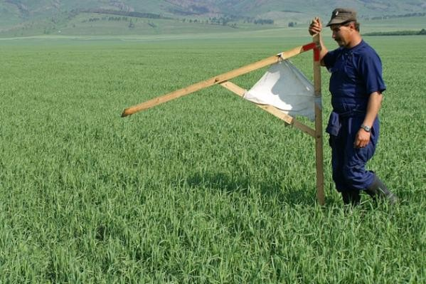 Более 300 татарстанцев подали заявки на «дальневосточные гектары»