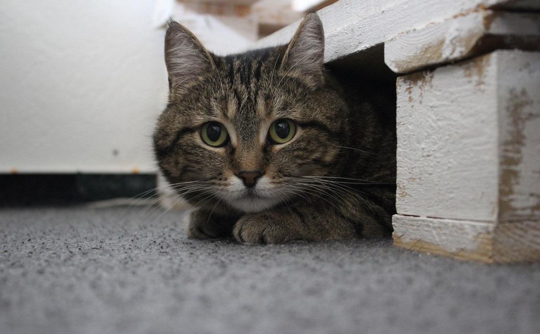 Мяу-бизнес: можно ли заработать на котиках в Ростове