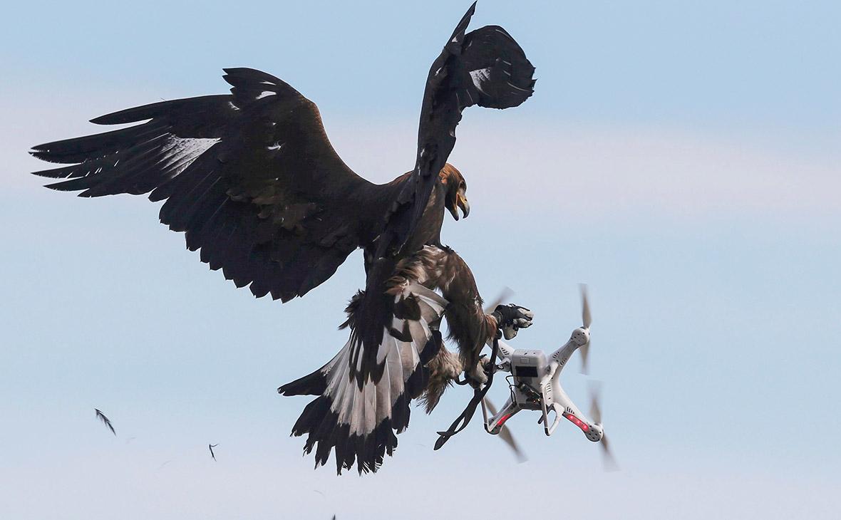 Минтранс предложил сбивать дроны за нарушение воздушного пространства