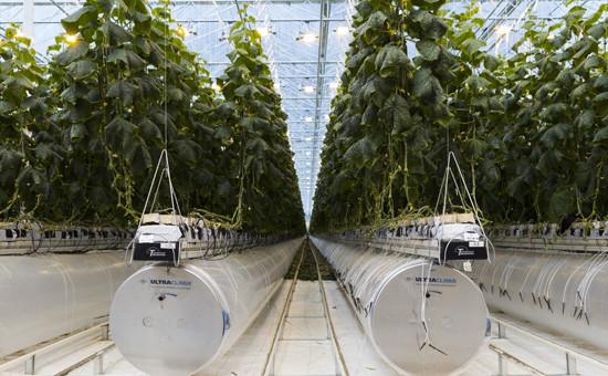 Космические огурцы: как овощи из теплицы помогли заработать миллиарды