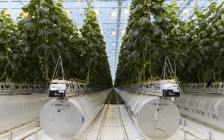 Космические огурцы: как выращивают овощи в теплицах высоких технологий
