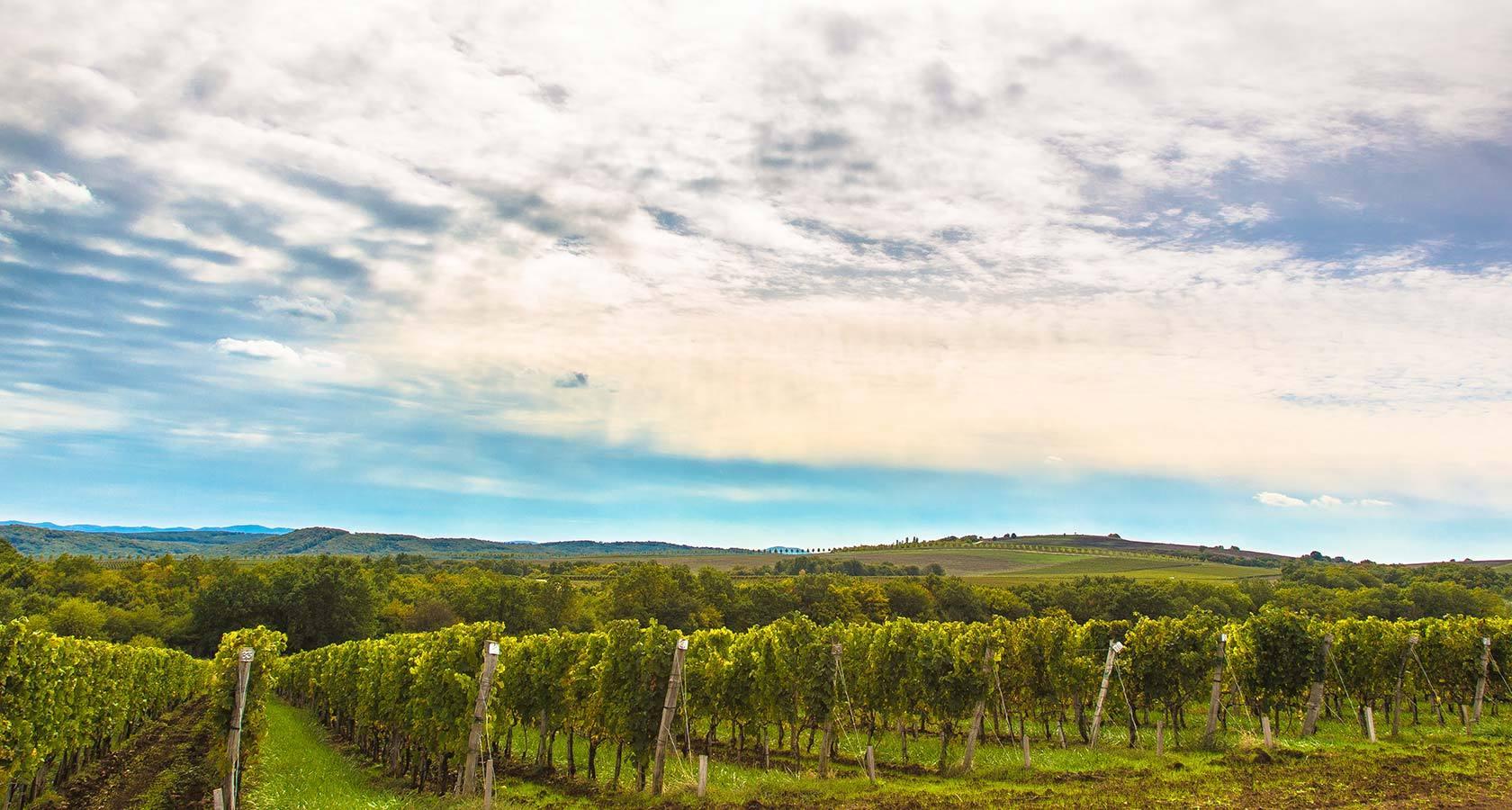 Виноградники в Долине Лефкадия