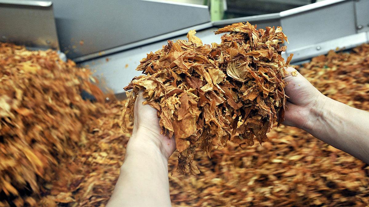Отчет об ингредиентах табачных изделий сигареты аврора купить