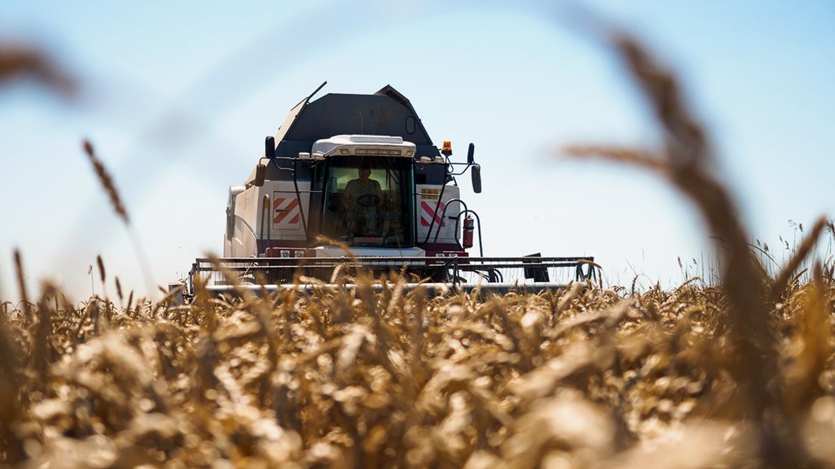 Торговля оптовая зерном необработанным табаком семенами и кормами для сельскохозяйственных реферат о табачных изделиях
