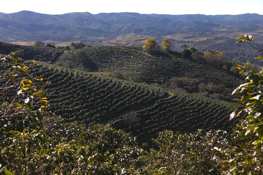 Кофейные плантации в бразильском штате Минас-Жерайс