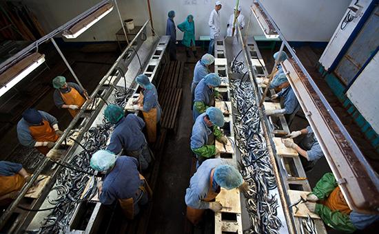 Цех назаводе рыбокомбината «Островной» наострове Шикотан
