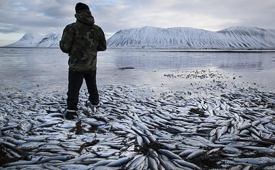 Продажа рыбного бизнеса в исландии подать бесплатное объявление в газету гиперинфо