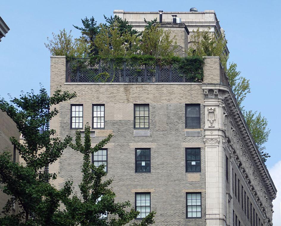 Парк с живыми растениями на крыше новостройки в Нью-Йорке