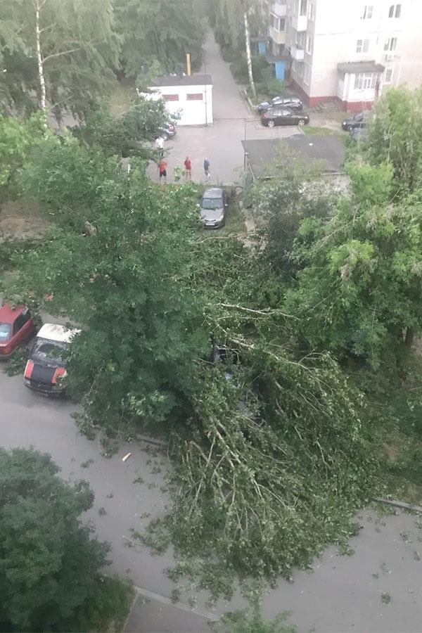 Фото:Дмитровский / Vk