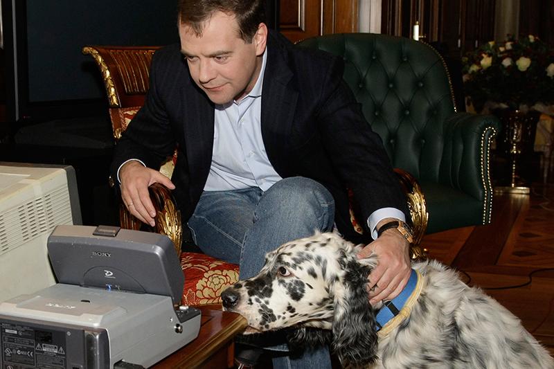 2008год. Светлана Медведева подарила своему мужу собаку породы английский сеттер. Ему дали кличку Дэниел, аспустягод он выиграл главный приз навыставке «Золотой ошейник»