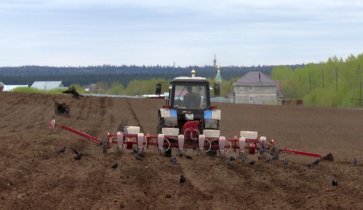 Эксперт заявил о серьезном снижении урожайности в Прикамье в этому году