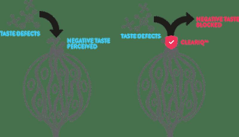 ClearIQ временно блокирует отдельные участки рецепторов на языке, не позволяя им считывать нежелательные вкусы