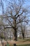 Фото: Почти 200 пней и еще 200 сухих деревьев предстоит удалить службам жилищно-коммунального хозяйства на юго-востоке Москвы в течение апреля этого года