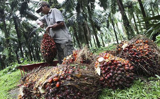 Минсельхоз «объявил войну» пальмовому маслу