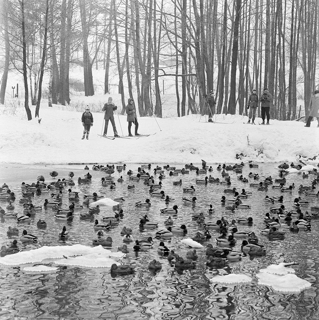 Утки в лесопарке «Кузьминки». 1983 год