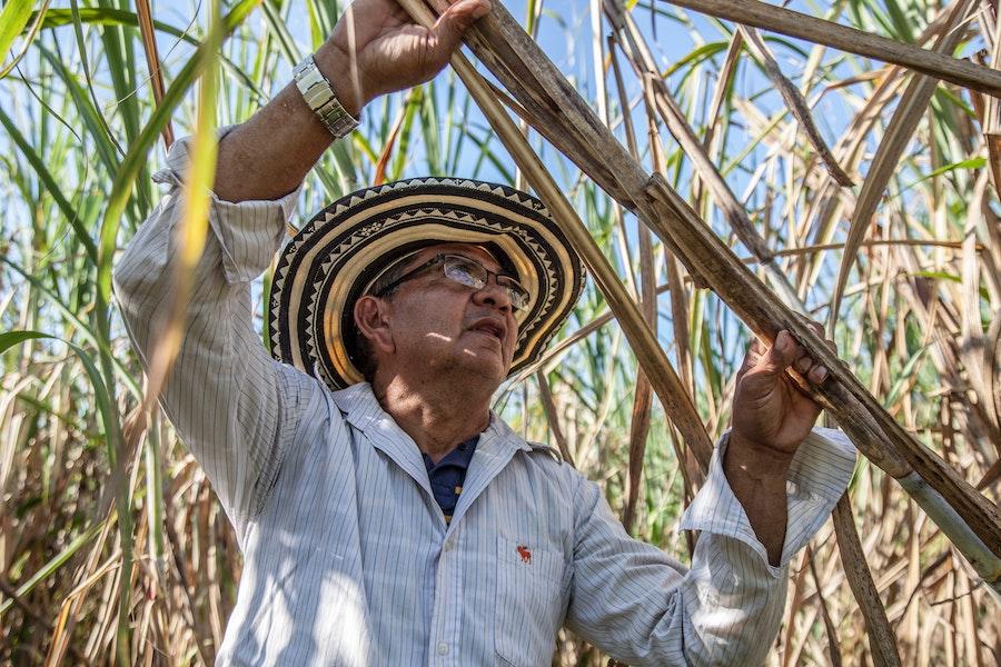 Тростниковая ферма в Колумбии