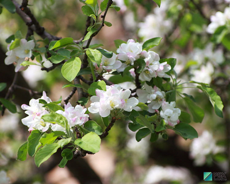Цветотипы теплая весна и теплая осень | TrendyTips | 600x750