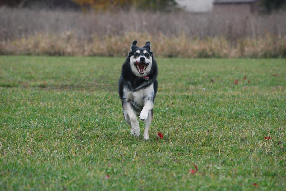 Фото:пользователь Michael Kappel с сайта Flickr.com