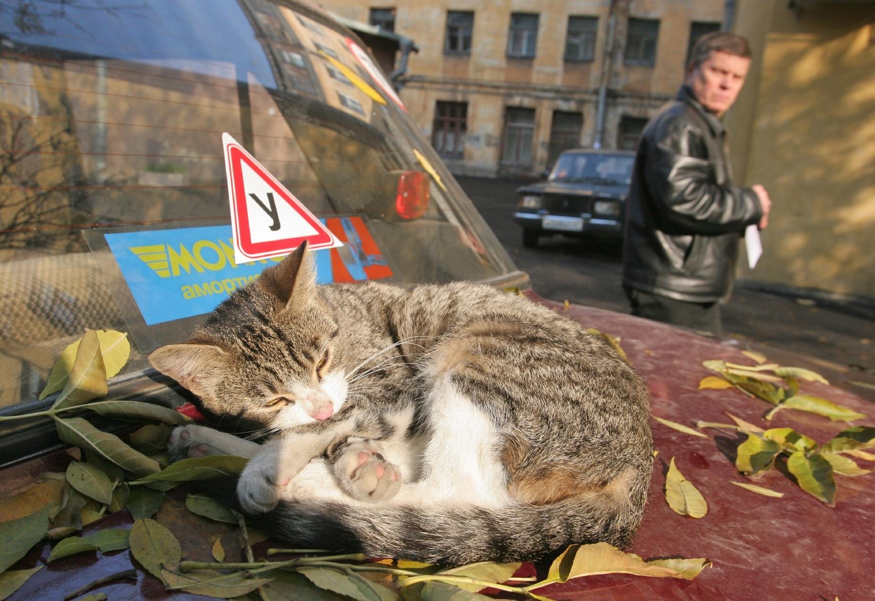 Фото: Интерпресс / PhotoXPress.ru