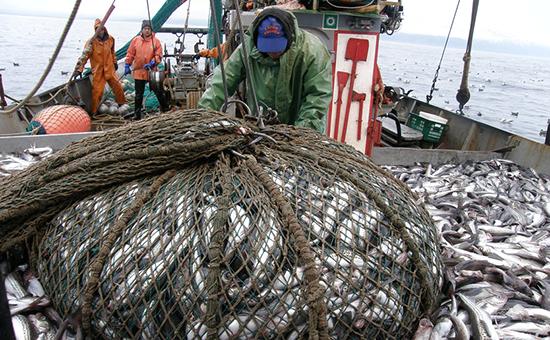 Компания «Русское море – Добыча», крупнейший в России владелец квот на вылов минтая