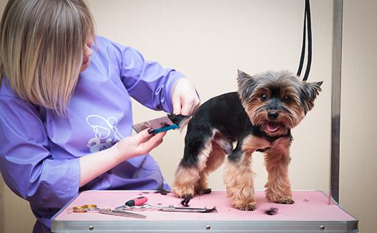 Живые деньги как заработать на услугах для домашних животных  Работа груминг сервиса Зоопрофи Фото Влад Шатило РБК