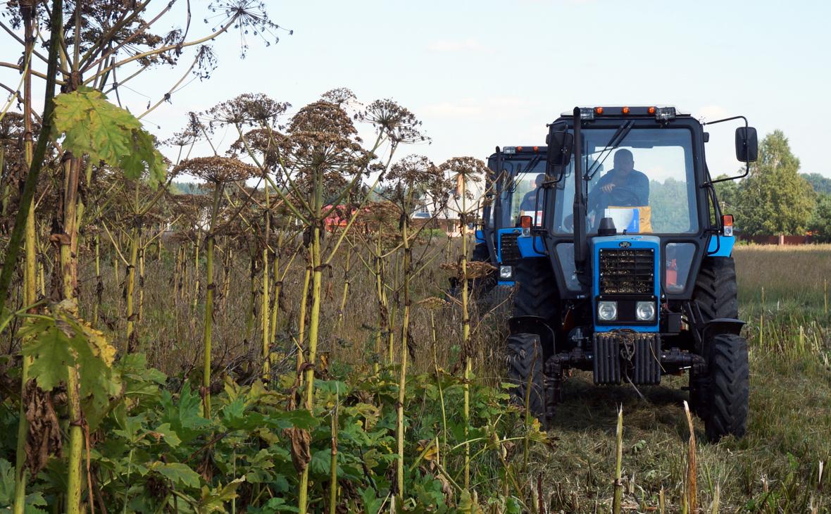 Юристы разъяснили возможность штрафа за сорняки на дачных участках