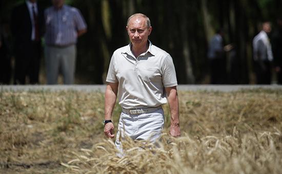 Владимир Путин вовремя осмотра пшеничного поля