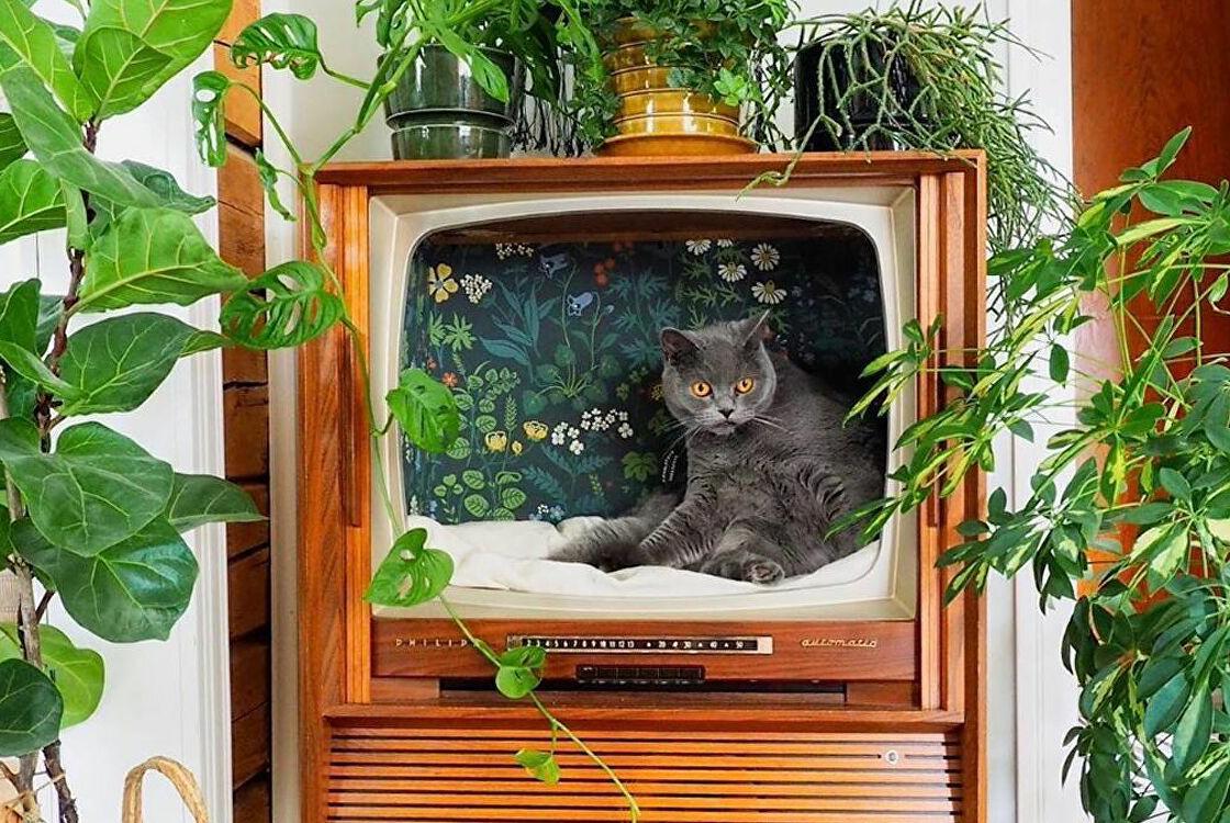 Стилизованные кошачьи домики