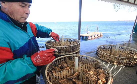 Во время высадки устриц надоращивание наферме повыращиванию устриц имидий наозере Донузлав у поселка Новоозерное вКрыму