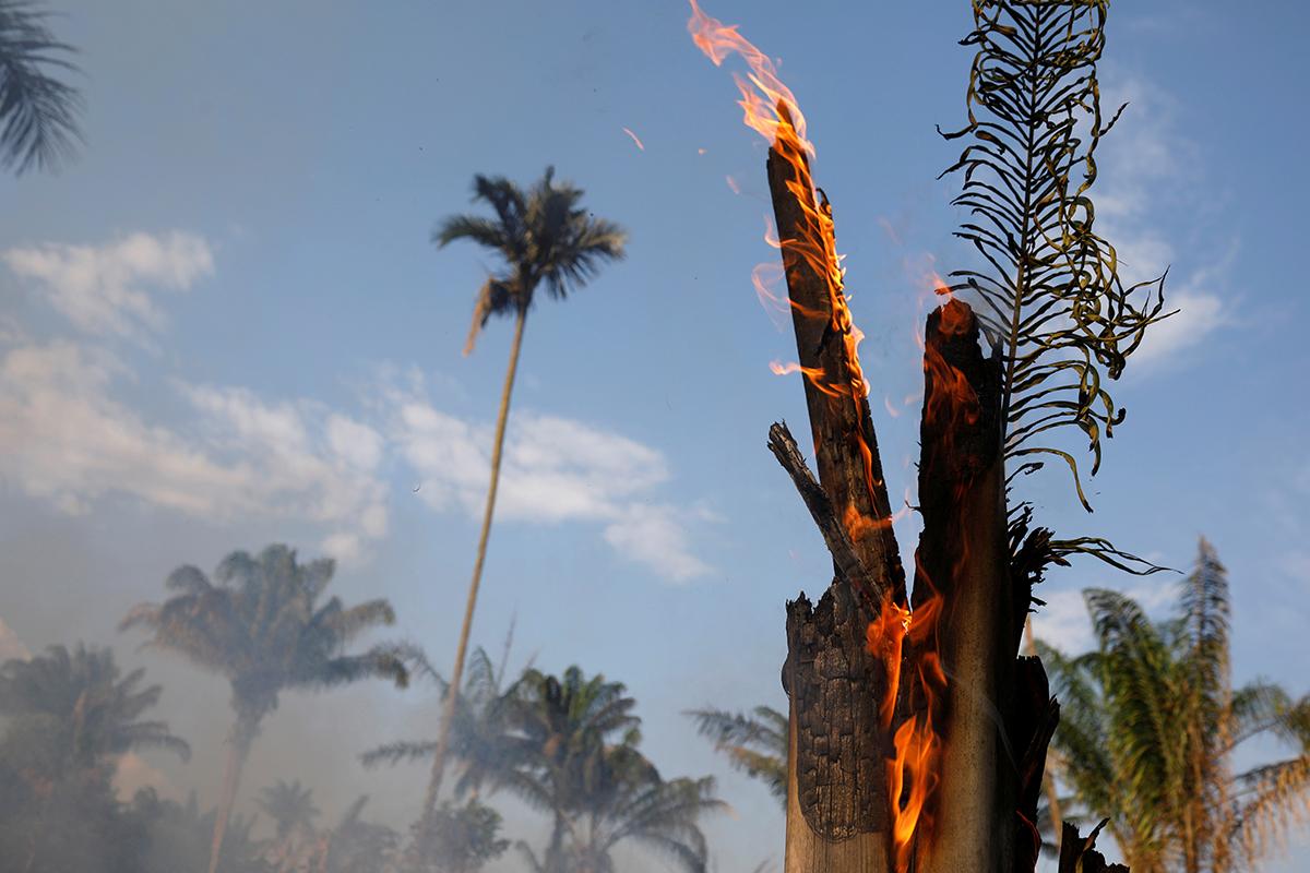Фото: Bruno Kelly / Reuters