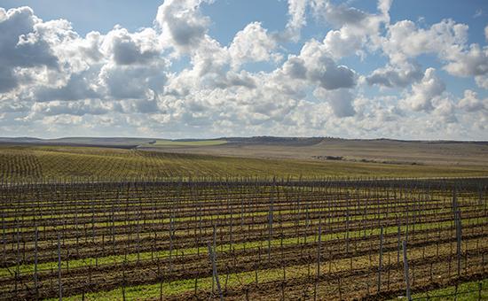 Вино для президента: кому принадлежит лучшая винодельня Крыма