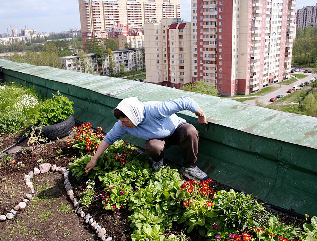 Иногда жильцы верхних этажей самовольноразбивают на крышах домов огороды — это незаконно