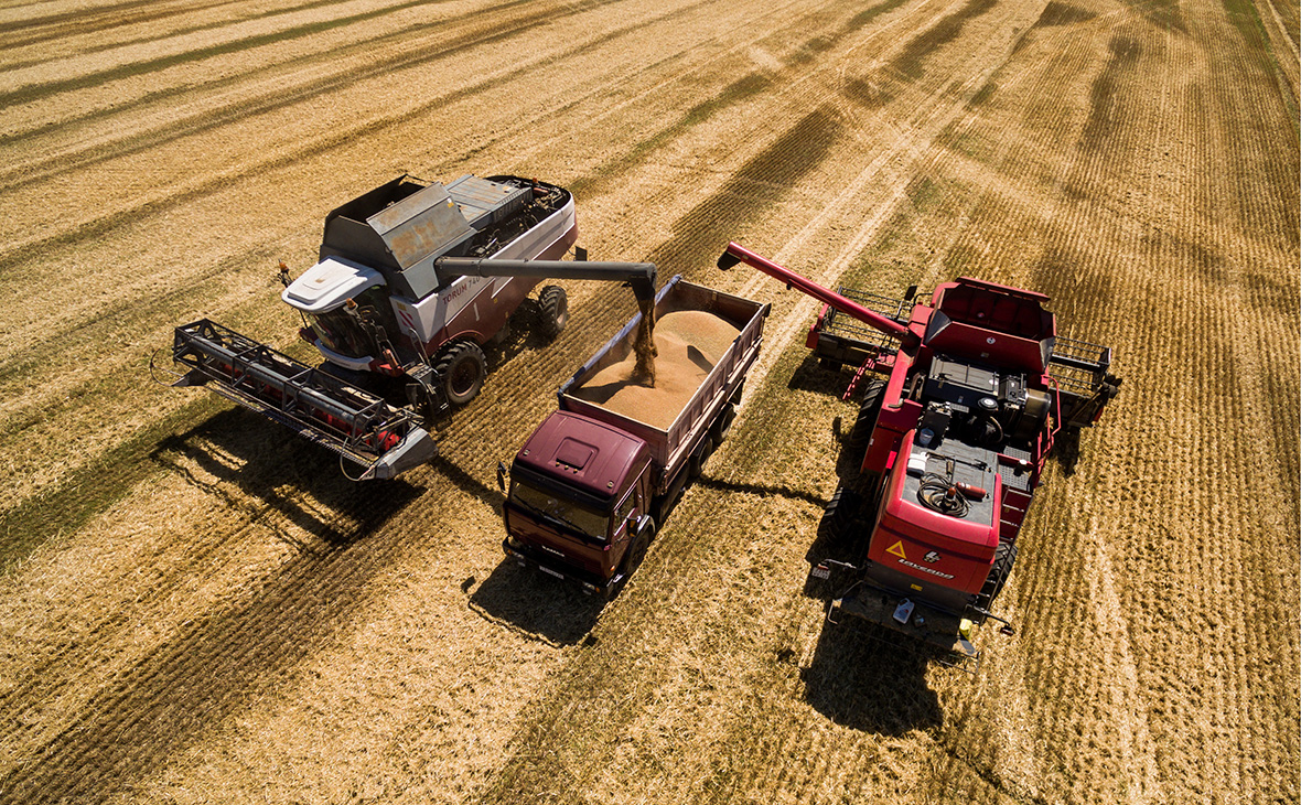 Лучше всего на ухудшения в экономике отреагировало сельское хозяйство